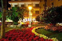 Poinsettia plants  Doctor Victor Perez Park  Puerto de la Cruz  Tenerife  Canary Islands  Spain.