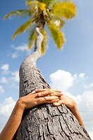 Hands together on palm tree, Maadaugalla Island, North Huvadhu Atoll, Maldives