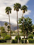 three palm trees together against mountain landscape Palm Springs USA