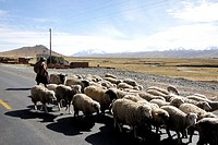 Herding sheep in Altiplano, Bolivia
