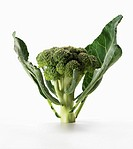 Stalk of Fresh Broccoli with Leaves