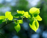 Close up of green leaves on a sunny day