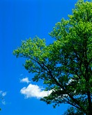 A tree bearing green leaves seen against sky