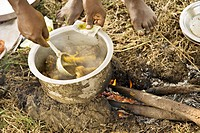 Non Vegetarian , Farmer cooking chicken gallina for his boys in his farm , Salunkwadi , Tal. Ambajogai , Dist. Beed , Maharashtra , India