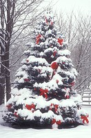 Christmas tree, bows, ribbons, outdoor, decorations, holiday, snow, winter, A large snow covered outdoor Christmas tree is decorated with red bows and...