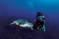 AustraliaWoman diver watching sea turtle