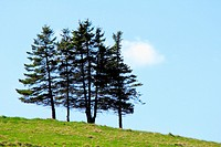 A patch of trees on a hill