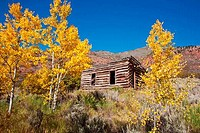 Old log cabin and aspen trees, Fischer Creek, Colorado, USA