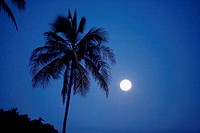 Silhouette of a palm tree under full moon, Maui, Hawaii, USA