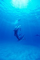 Small group of dolphins swimming underwater