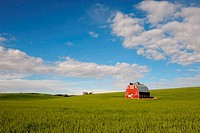 USA, WASHINGTON STATE, PALOUSE COUNTRY NEAR PULLMAN, RED BARN IN WHEAT FIELD WITH ALTOCUMULUS CLOUDS