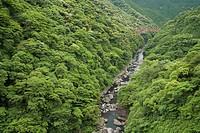 Aso Kitamukidani Forest, Minamiaso, Kumamoto, Japan