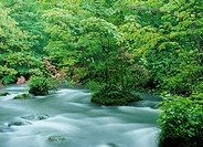 Azalea and Mountain Stream, Aomori, Japan