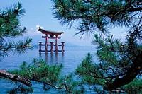 JAPAN, NEAR HIROSHIMA, MIYAJIMA ISLAND, OTORII GATE, PINE TREES