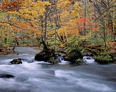Autumn Leaves And Mountain Stream, Aomori, Japan