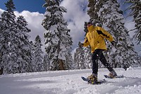 A man walking on snowshoes past snow covered pine trees at Northstar near Lake Tahoe in California