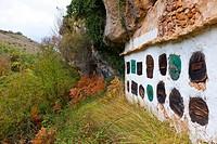 Colmenas en olmos viejos o Dujos  Gredilla de Sedano  Valle de Sedano  Cañón del Ebro  BURGOS  CASTILLA Y LEÓN  ESPAÑA.