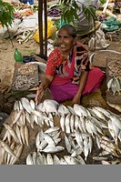 Fish vendor at the Gingee Salai fish market in Pondicherry India.