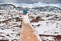 Greenland, Jacobshavn, Disko Bay