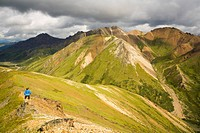 Female hiking on a ridge near Sable Pass in Denali National Park, Interior Alaska, Summer/n
