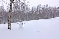 Snowman wearing a scarf and black top hat standing in a snow covered birch forest, Russian Jack Springs Park, Anchorage, Southcentral Alaska, Winter