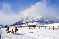 Family pulls a Christmas tree home on a sled near Crested Butte, Colorado, Rocky Mountains, Winter