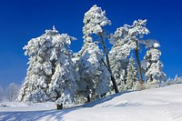 Saint Brais, Switzerland, Europe, canton Jura, trees, snow, hoarfrost, cold, winter