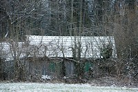 Shed obscured by bare trees in winter