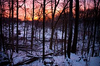 Sunrise over a fresh snowfall in the woods.