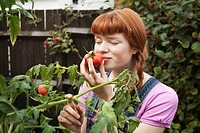 Woman smells homegrown tomato in garden