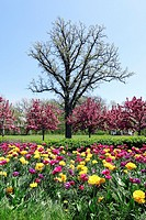 Spring in a suburban park with blooming trees and flowers