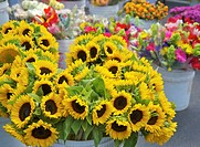 Flowers at Farmer´s Market