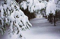 Snow_covered path in Scanlon Creek Conservation Area. Bradford, Ontario