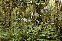 Amazon rainforest. Tropical rainforest in Pastaza Province, Ecuador.