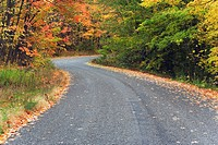 Forest road in early fall, Peterborough, Ontario, Canada