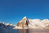 Klokketinden peak with gulls, Moskenesoy, Norway