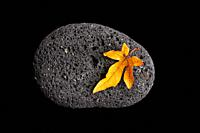 autumn leaf on stone - japan zen spirit inspired arrangement