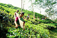 Tea is a major industry in Bangladesh and grows in the low hills of Chittagong and Sylhet The tea plantation workers in Sylhet are mostly ethnic Santa...