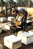 Apiarist working on his beehives