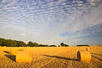 Aitocumulus or Mackerel Sky over Cornfield and Straw Bales South Boarhunt Hampshire