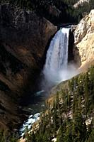 Lower Falls in the Yellowstone River Grand Canyon in Yellowstone National Park in Wyoming, United States