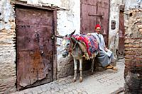 A donkey waiting in the street of the Medina, old city of Fes, Morocco