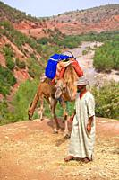 Camels in the Ourika Valley, Morocco