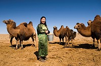 Female Mongolian nomad in front of camels, Mongolia