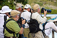Lindblad Expeditions Guests eager to photograph flamingos on Floreana Island in the Galapagos Island Archipeligo, Ecuador No model releases
