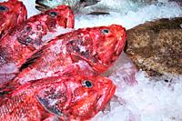Scorpionfishes Scorpaena Scrofa in a fish shop of San Miguel Market Madrid, Spain