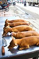 Dog meat sale. Hanoi. Vietnam.
