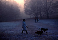Misty Winter morning Lady in plastic coat Hampstead Heath, London, UK