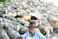 Sheep shepherd in Casasana, Alcarria, Guadalajara province, Castilla-La Mancha, Spain