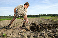 Mid adult man digging in field (thumbnail)